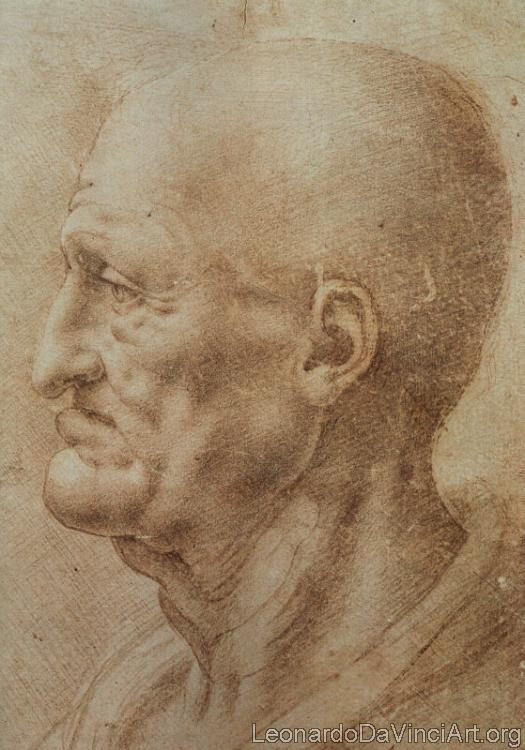 Study of an Old Man's Profile
